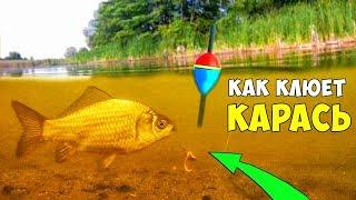 На что клюет рыба в озере летом