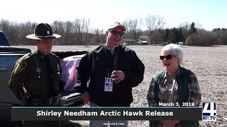 Hawk Release with Shirley Needham