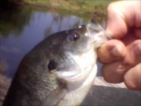RCF: Pond Fishing Ep.10: With My Grandpa: Big Bluegills