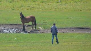 Поиск лошадей, отбившихся от табуна