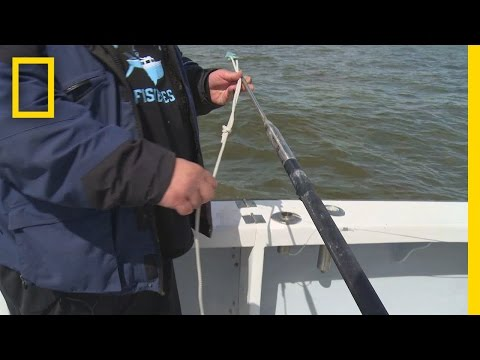 Fishing Tips: How to Rig a Harpoon   Wicked Tuna: Outer Banks