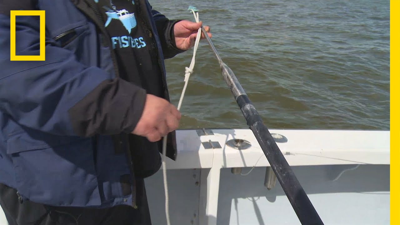 Fishing Tips: How to Rig a Harpoon | Wicked Tuna: Outer Banks thumbnail