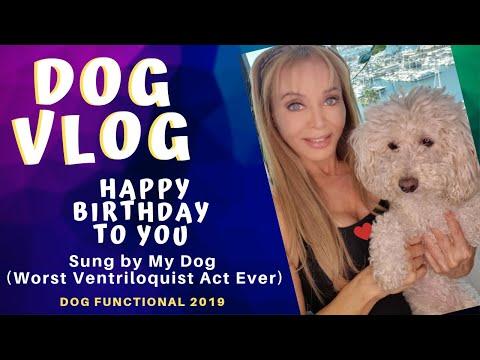 Dog Sings Happy Birthday 🤣