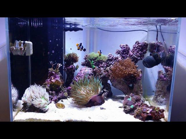 Reef Tank Update # 6 New Ai Prime LED