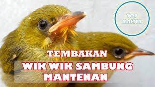 TEMBAKAN WIK WIK PANJANG SAMBUNG MANTENAN PALING TOP
