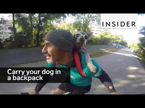 You Can Now Carry Your Dog Around In A Backpack