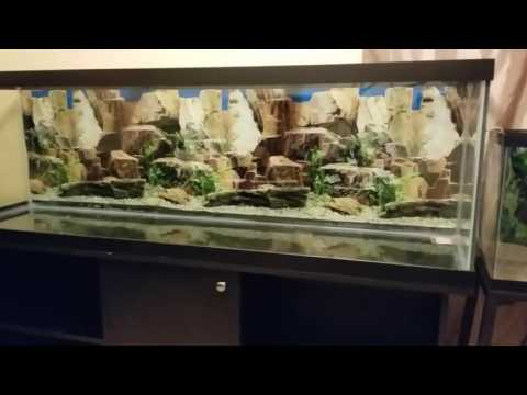 How-to Setup a New or Used Aquarium / Fish Tank