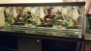 How-to Setup a New or Used Aquarium / Fish Tank | Kholo.pk