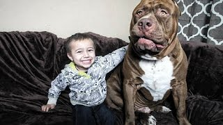 THE HULK LIFE: Omg! He bit the baby!!!