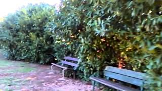 preview picture of video 'Parco via Palmiro Togliatti - Fiano Romano'