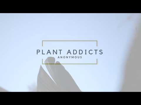 Plant Addicts Anonymous Advert