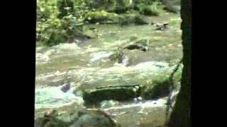 Video LUCREZIA BORGIA-TÍR NA MBÉO-EDICE 10 LET.flv