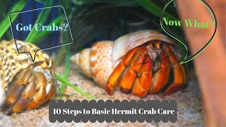 Basic Hermit Crab Care - How to Have a Happy Hermit Crab | By Crab Central Station