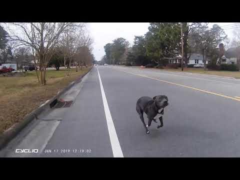 Dog Compilation
