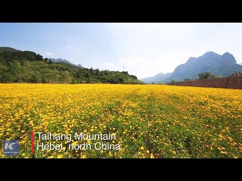 Flowers bloom in N China