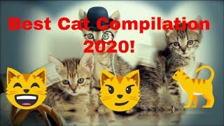 Best Cat Compilation 2020
