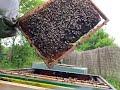 ? Visite pour un transfert ruchette en ruche ?