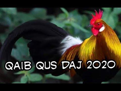 Saib qaib qus daj zoo nraug heev 2020