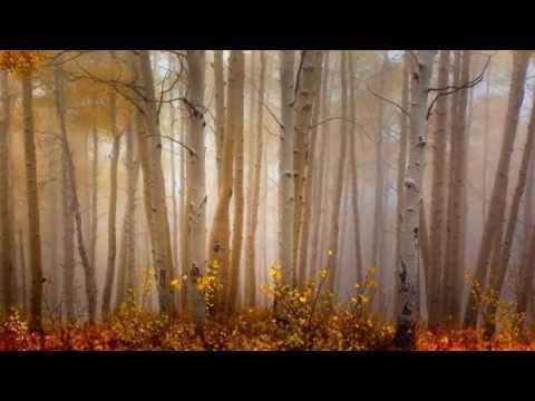 101 Strings Orchestra -  Autumn Leaves - Joseph Kosma, Jacques Prévert