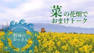 野洲のおっさん おまけ映像in菜の花畑