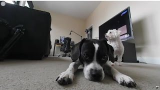 Puppy 360°: Samsung Gear 360 Camera (VR)