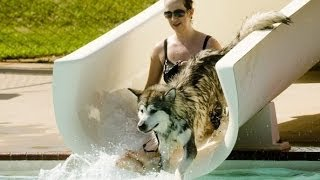 Dogs and waterslides