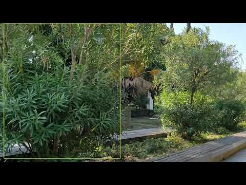 """VR-Park A.I. – Plant species identification in """"Pedion Areos"""" park (test video 1)"""