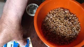 Как варить пшеницу и горох для рыбалки в термосе