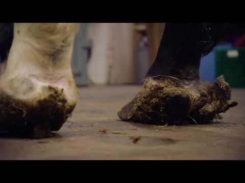 Butakowa die Vorlesung die Schuppenflechte