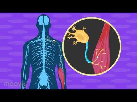 Benigner Prostatahyperplasie