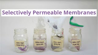 Selectively Permeable Membranes