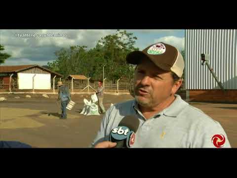 Fazendas do Sul de Minas investem em secadores estáticos