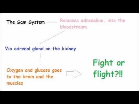 Hypertonie und moderne Behandlungsmethoden