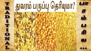 துவரம் பருப்பு | toor dal varieties | Processing of toor dal | நாட்டு துவரம் பருப்பு | நாட்டு துவரை