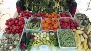 Vegetable Garden Harvest - God's Blessings Abound