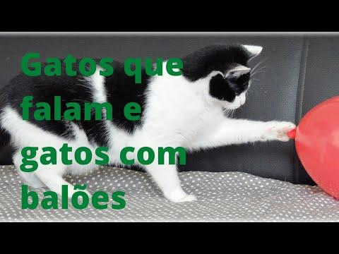 Gatos que falam e gatos com bales