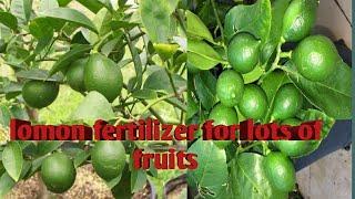 Best Fertilizer For Lemon Plant