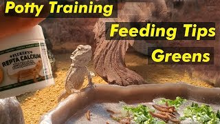 How To Potty Train A Baby Bearded Dragon! (Bearded Dragon Diet/Care)