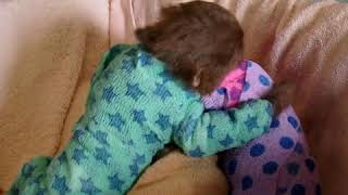 Adorable Baby Sloths Get Handmade Onesies After Treatment For Mites.