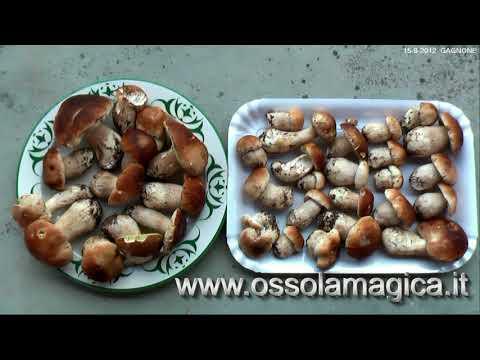 Malavit contro un fungo di unghia