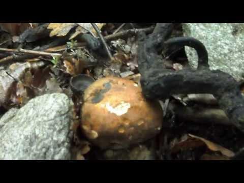 Mezzi da un fungo che sopporta una fotografia
