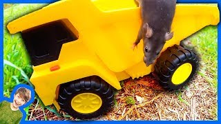 RATS IN TOY CONSTRUCTION TRUCKS!