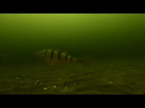 На дне Чудского озера