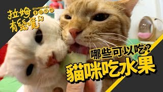 Can cats eat fruit ? |LAMUNCATS ♤