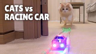 Cats vs Racing Car