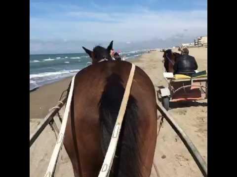 Consegna di attivatore di cavallo da posta
