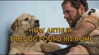 How Arthur The Dog Found His Home | Short Documentary | 2017 HD