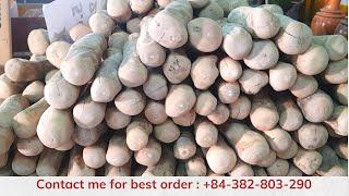 Coffee wood dog chew wholesale/supplier/manufacturer Viet Nam youtube video