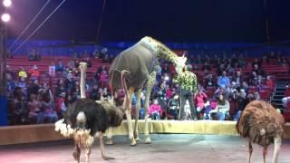 Прикол Цирк Кобзов жираф