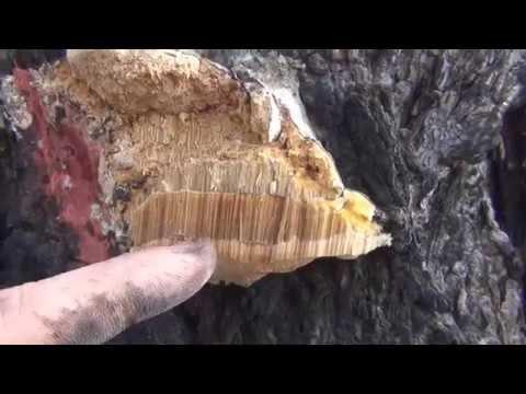 Мед действие на печень